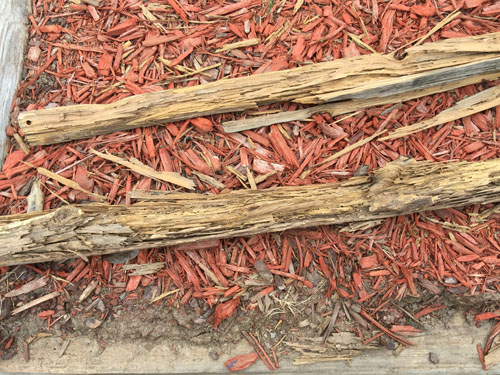 Top 10 Tips For Termite Control